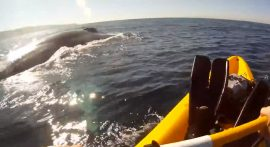 Rick Coleman kayaks with blue whales off Redondo Beach. Screenshot from YouTube video.